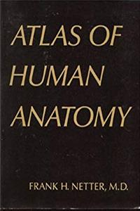 Download Atlas of Human Anatomy fb2